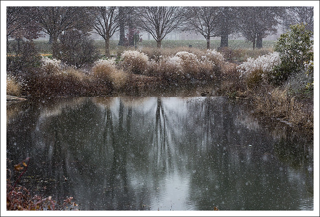 Forest Park First Snowfall 2014-11-16 1