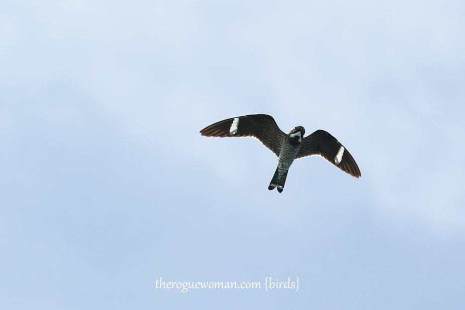 091514_bird29