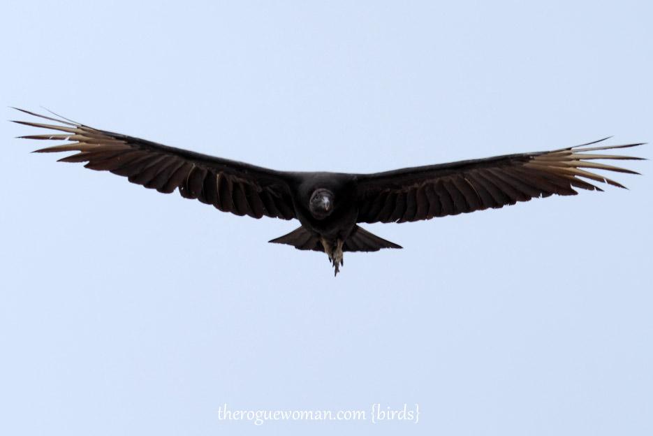091514_bird24