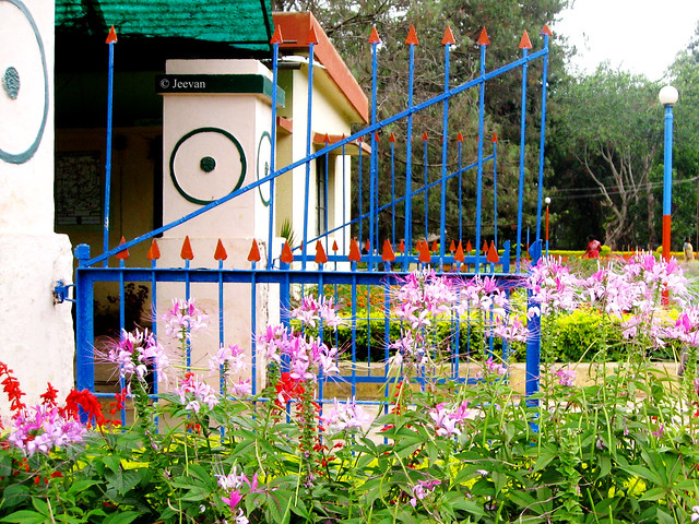 Garden gate and flowers