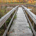 Stephen Young Marsh Trail by U. S. Fish and Wildlife Service - Northeast Region