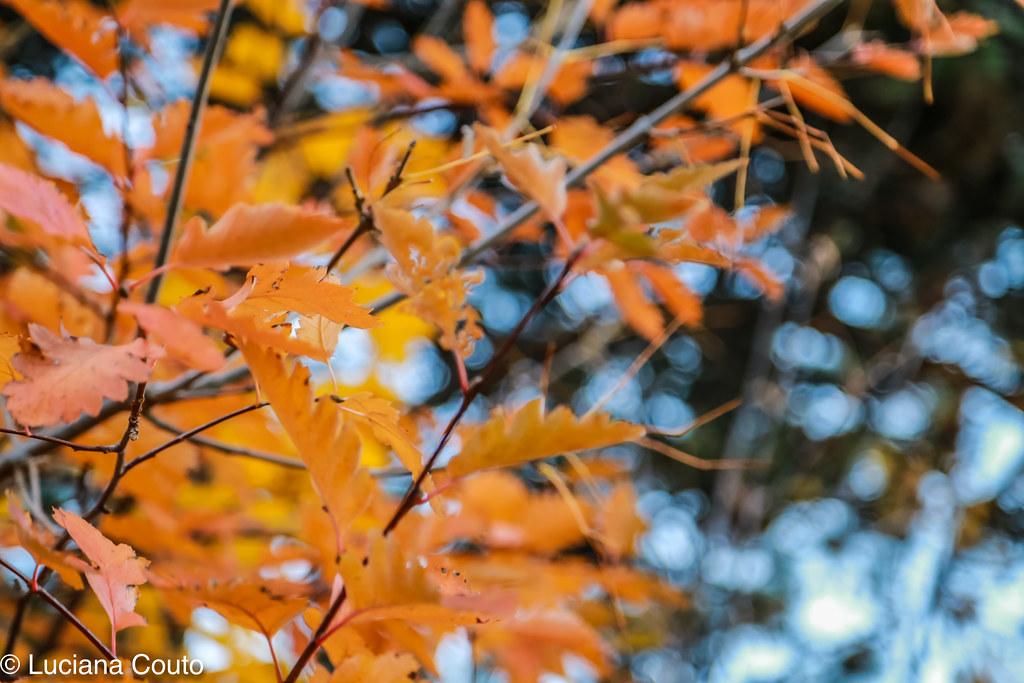 Fall at Toronto