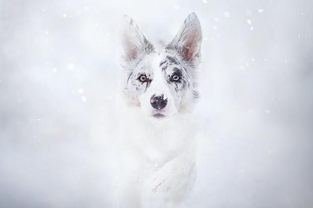 Snowtime!, Canon EOS 5D MARK III, Canon EF 135mm f/2L