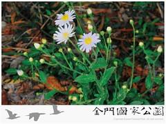 琴葉紫菀-01