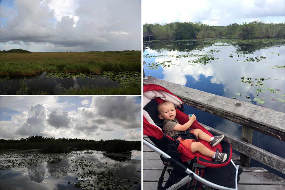 090714_Everglades09