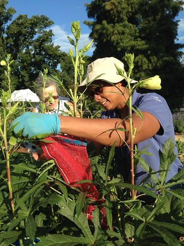 USDA People's Garden