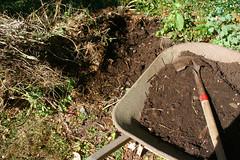 planting garlic - compost IMG_0061