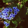 Forget-me-nots #tattooinspiration