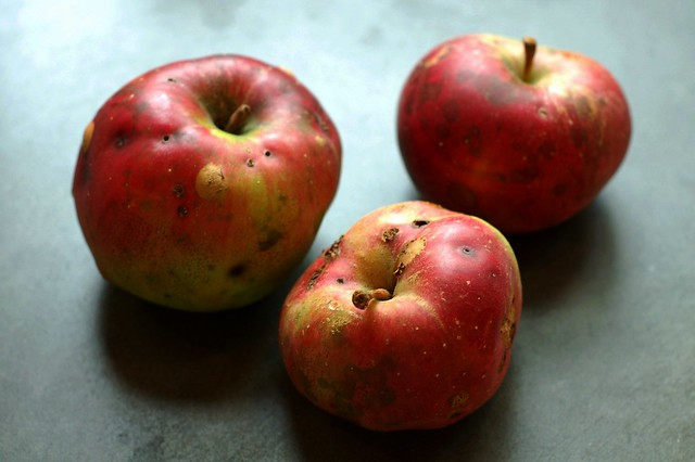 Very local apples by Eve Fox, Garden of Eating blog, copyright 2011