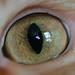 Dave's Eye