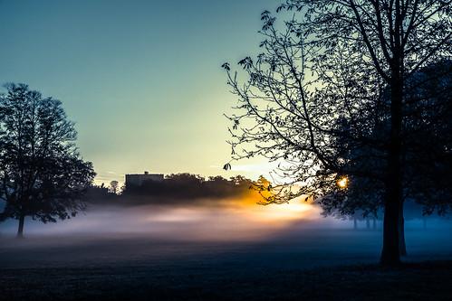 park sun france nature colors fog mystery forest sunrise canon outside soleil lyon couleurs magic paysage foret parc shining aurore dehors magique mystère parcdelatêtedor