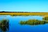 Land Of The Marsh