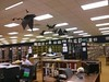 Bats have invaded the library! When you are here, check out the origami bats made by our own Robert Taylor.