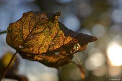 HerbstWaldZombie