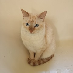 Bathtub kitty. #nofilter
