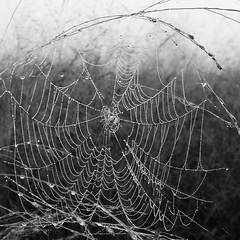 #spiderweb #blackandwhite #whalonlake #fog