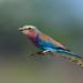 Beautiful Bird by mnreddy9