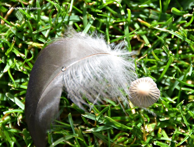Feather and Mushroom