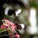 flutter, flutterby, flutter