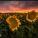 Sunsation by Aaron M Photo