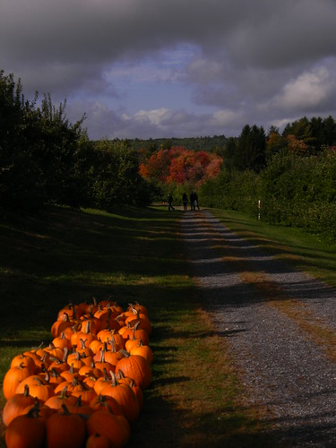 fall harvest foliage pyoapples doeorchards