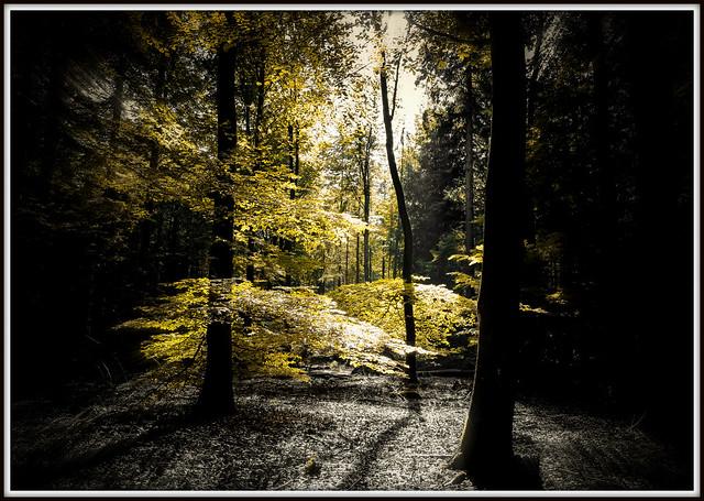 Autumn in Holland..