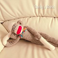 This is the 67th Sock Monkey♡ He was born on October 14. 何年か前に母にあげた『Bowty』って名付けたソックモンキーに似てるので、従兄弟だな⊂((・⊥・))⊃  #ソックモンキー #ハンドメイド #蝶ネクタイ #レッドヒールソックス#sockmonkey #handmade #bowtie  #redheelsocks