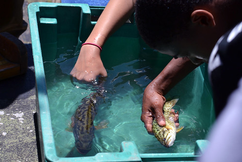 For some young urban dwellers, looking at and touching live fish is a new experience. The U.S. Forest Service programs help to teach young people the value of open spaces and conservation. (U.S. Forest Service)