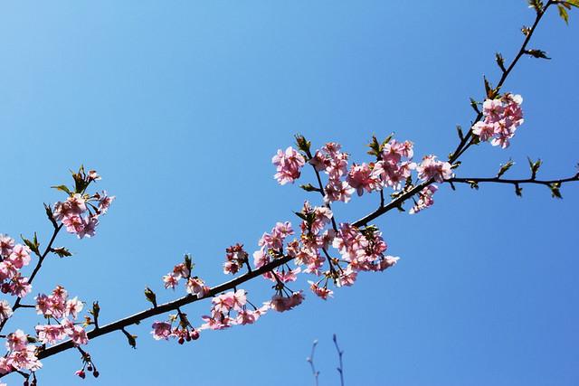 2014-03-16_00085_高松山