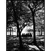 A quiet park morning #wearejuxt #wearegrryo #hermannpark #texas #igtexas #igofhouston #igershouston #park #silhouette
