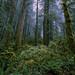Opal Creek Wilderness by John Behrends