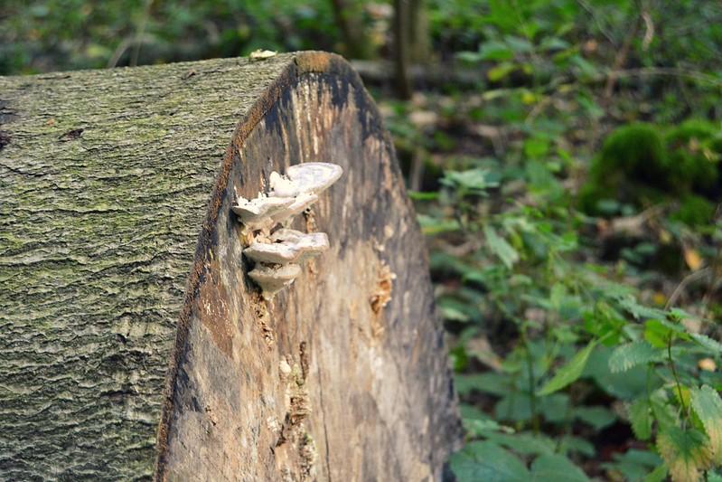 hongo en el tronco