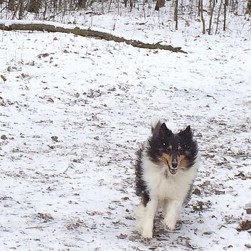 Running through the snow.