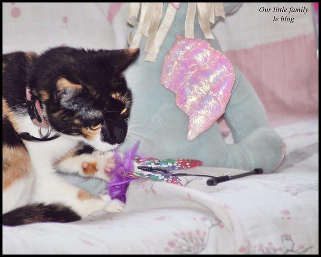 lakittyboxchatcat13