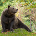 Brown Bear by Rob Christiaans  Nature and Wildlife