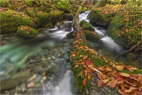 naturaleza rio hojas paisaje otoño león castillayleón argovejo riochín pitusa2 elsabustomagdalena