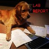 When You Cramming For That Test With An All Nighter Because You Didn't Go To Class At All This Semester & You Wish When You Hit The Keyboard For 1 Letter With Your Paw It Didn't Hit 3 Letters Every Time! #labs #labreport #whahappened #scholar #dreams