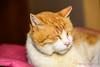 Cats-0016-20141027.jpg