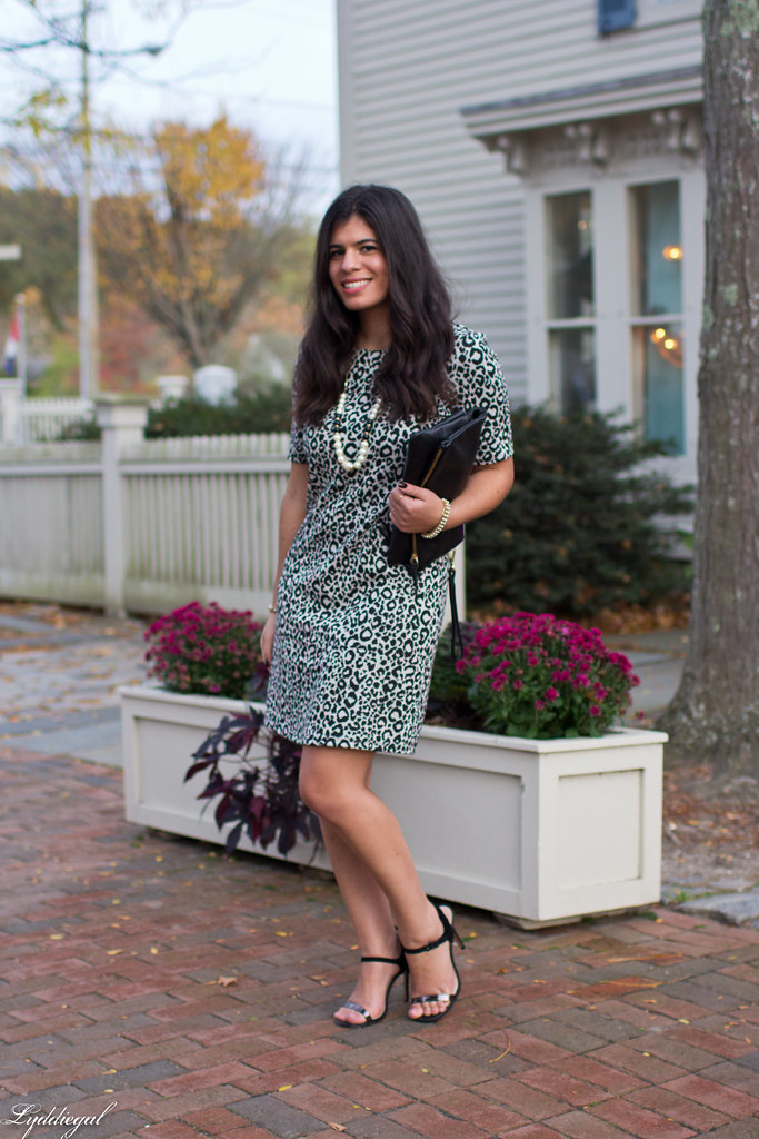 leopard dress, black clutch, black heels-5.jpg