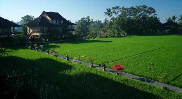 sribungalow-ricefield-view