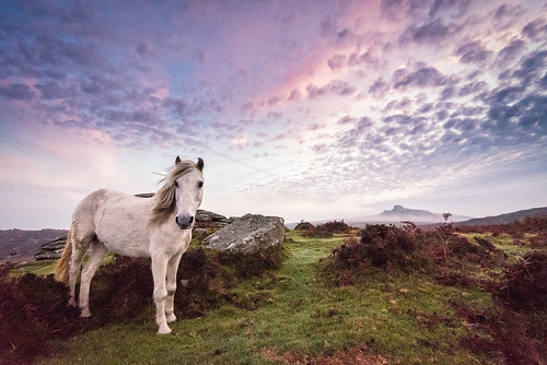 england horse animal landscape rocks unitedkingdom pony devon dartmoor newtonabbot sunriseemsworth
