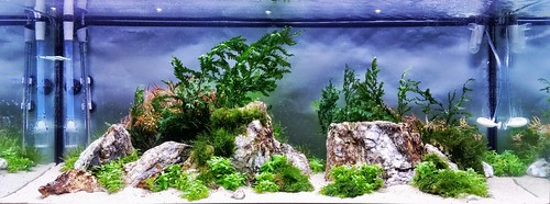 Aaron Talbot, Cavan Allen, And I Worked Together On This Aquascape About 3  Months Prior To The Contest. The Rocks Are A Quartz Based ...