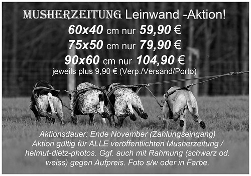 Musherzeitung /( helmut-dietz-photo - Leinwandaktion-Musherzeitung November 2014