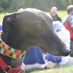 Greyhound Adventures at Minuteman State Park, Lexington MA, Oct 16th 2016