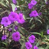 #garden #green #purple #flowerstalking #flowers
