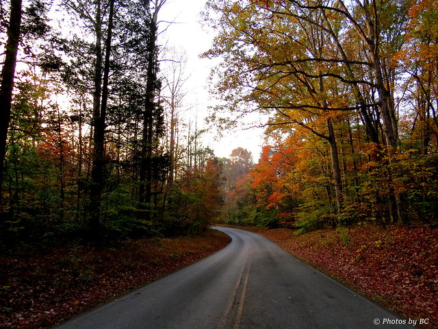 Road in the park, Canon POWERSHOT SX50 HS