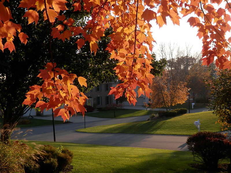 Autumn Leaves in West MI