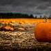 A Forest of Pumpkins by Brandon_Hilder