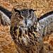 Eurasian Eagle-Owl (II) by Abariltur