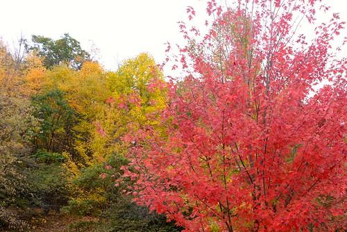 autumn usa fall unitedstates westvirginia